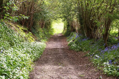 Country Lane. Country shaded Lane with wild flowers and bluebells Stock Photography