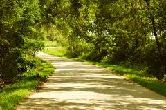 Country Lane. A tree lined country road Royalty Free Stock Photography