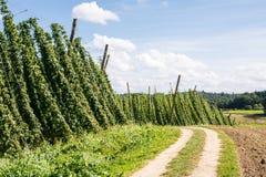Country Lane along a Hop Garden Stock Photography