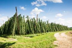 Country Lane along a Hop Garden Stock Photo
