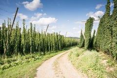 Country Lane along a Hop Garden Stock Image