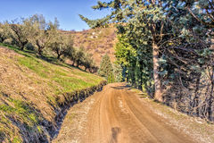 Country lane bordered by cypresses Royalty Free Stock Photo