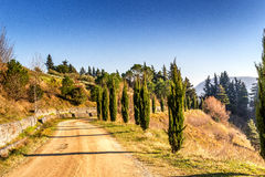 Country lane bordered by cypresses Royalty Free Stock Image