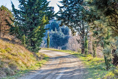 Country lane bordered by cypresses Stock Photos