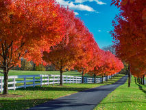 Country Lane Bordered by Spectacular Autumn Foliage and White Fencing Royalty Free Stock Photos