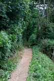 Country Lane in British Countryside Royalty Free Stock Image