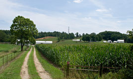 Country Lane with Corn Field Royalty Free Stock Photos
