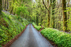 Country Lane in Cornwall Stock Photo