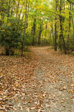 Country Lane Covered with Autumn Leaves Stock Photos