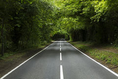 Country lane in the daytime with forests on either side. A country lane through some forests Stock Image