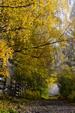 Country Lane with Deciduous Trees in Autumn Colors Royalty Free Stock Photography
