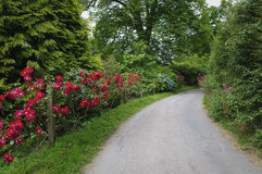 Country lane in Devon Stock Photo