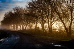Country lane in early morning Stock Photos