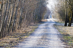 Country lane in early spring Royalty Free Stock Image