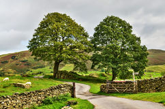Country lane entering lush farmland Stock Images