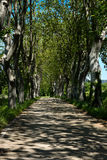 Country Lane In France Royalty Free Stock Images