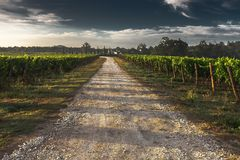 Country Lane, Gravel Road, Tuscany Stock Images