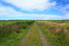 Country Lane, Ireland. A long straight country lane in County Clare, Ireland. With hedgerows dotted with wild flowers Royalty Free Stock Images