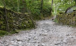A road leading through a forest with a stone wall. royalty free stock images