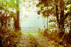 Country lane Royalty Free Stock Images