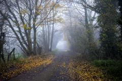 Country lane in morning mist UK. Early morning fog in country lane Cheshire UK Royalty Free Stock Image