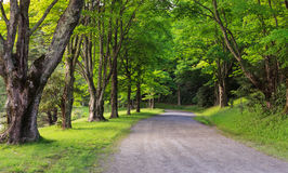 Country Lane Moses Cone Park Western North Carolina Royalty Free Stock Photo