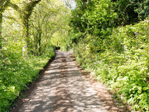 Country Lane Royalty Free Stock Photo