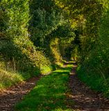 Country lane near Church Aston Hill royalty free stock photography