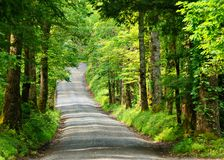 Country Lane. Old country lane at Cades Cove, Smoky Mountain national park Royalty Free Stock Image