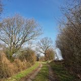 Country lane between planted walls and single trees. A Kink or Hedged bank in German: Knick is a woody overgrown, mostly artificially built earth or stone wall Royalty Free Stock Images
