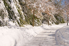 Country lane after snowstorm Stock Images