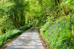 Country Lane in Spring Stock Images