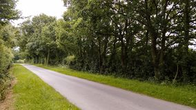 Country Lane in Spring Time. Country lane with avenue of trees in spring time green lush vegetation Royalty Free Stock Photo