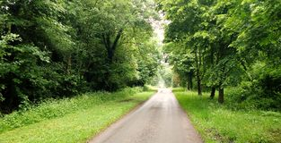 Country Lane in spring time. Country lane with avenue of trees in springtime very green and lush vegetation Royalty Free Stock Photography