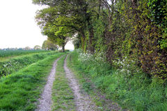 Country lane walk Royalty Free Stock Images