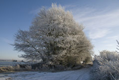 Country lane in winter snow and frost. Royalty Free Stock Photography