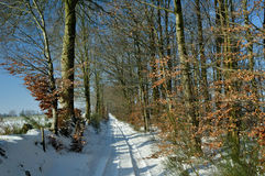 Country lane through woods in winter Royalty Free Stock Photography