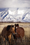 The Country Life. Two horses living the simple country life Stock Photos