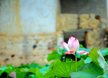 Country life in Chinese hakka round house Royalty Free Stock Photo