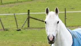 Country life - Horse portrait Royalty Free Stock Image