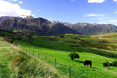 Country life new zealand (2) Royalty Free Stock Photo