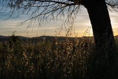 Country life sunset Stock Photos