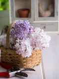 Country Lilacs in a basket Stock Image