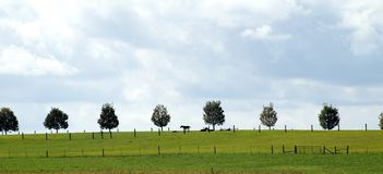 Country lines. Rural tree line and fence lines in a horse pasture Stock Image