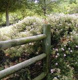 COUNTRY LOG FENCE WITH FLUFFY CREAM COLORED FLOWERS Royalty Free Stock Image