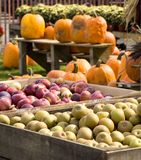 Country market display. Country market produce of autumn's bounty Royalty Free Stock Image
