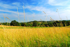 Country meadow landscape Royalty Free Stock Image