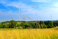Country meadow landscape Royalty Free Stock Photo