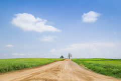 Country Meadowns in sky. Grass fields across blue sky with clouds Royalty Free Stock Image