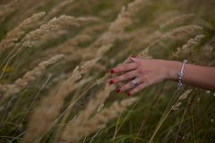 Ripe ears wheat in woman hands against a background of wheat field. Country, nature, summer holidays, agriculture and people concept - close up of young woman Royalty Free Stock Photography